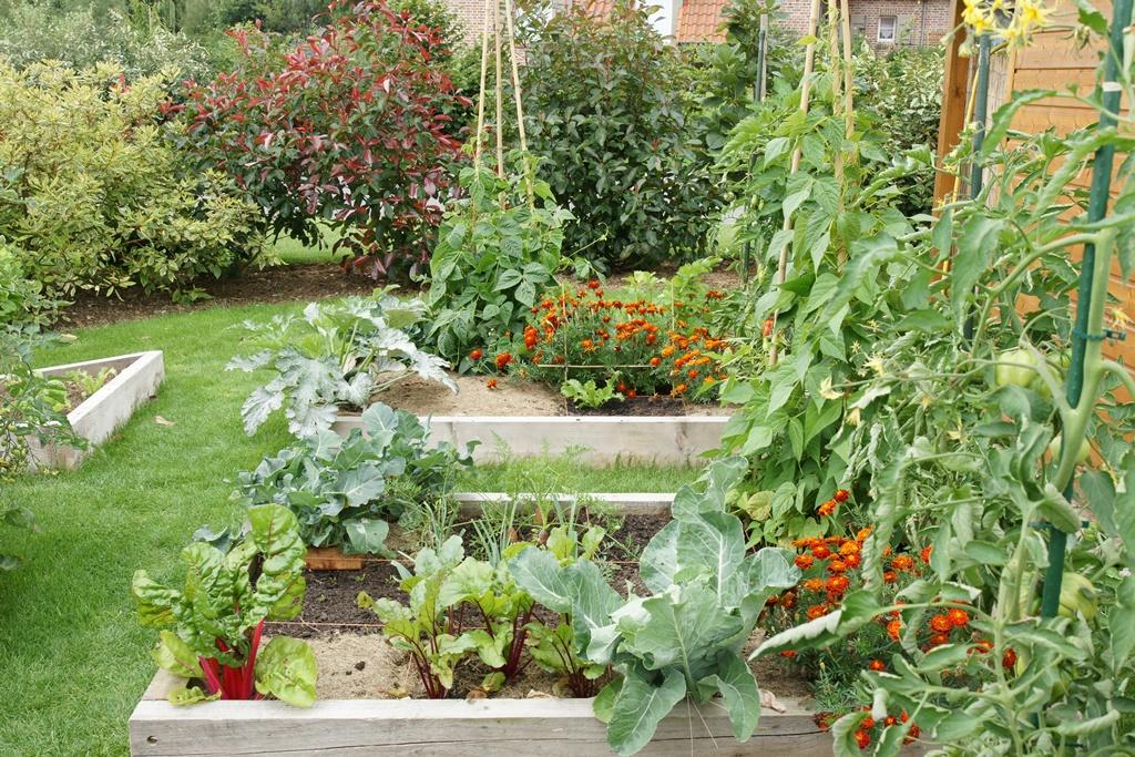 La culture des brocolis page 4 au jardin forum de jardinage - Jardin ville de quebec perpignan ...