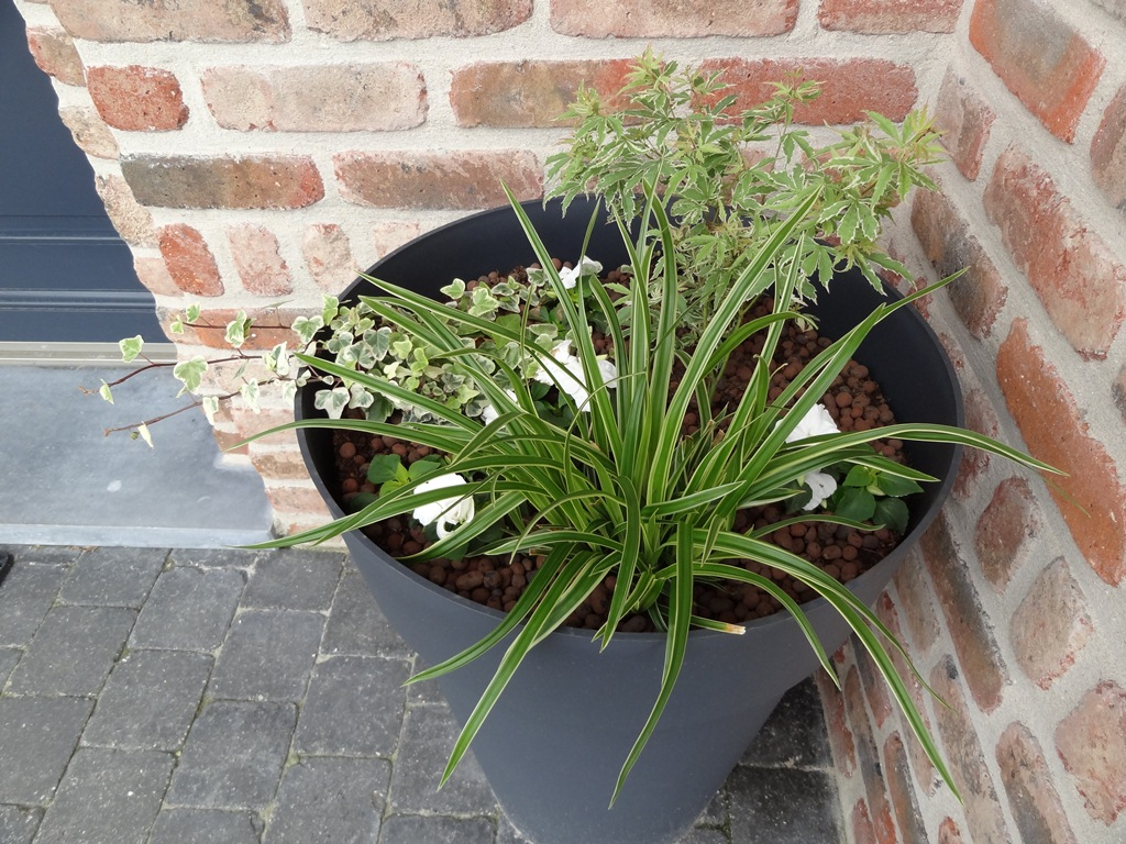 Plante exterieur ombre en pot 28 images planter des for Plante pot exterieur